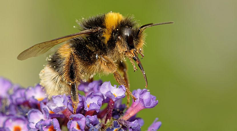 Don't Step On A Bee Day 2017 - Help Care For These Crucial Creatures!