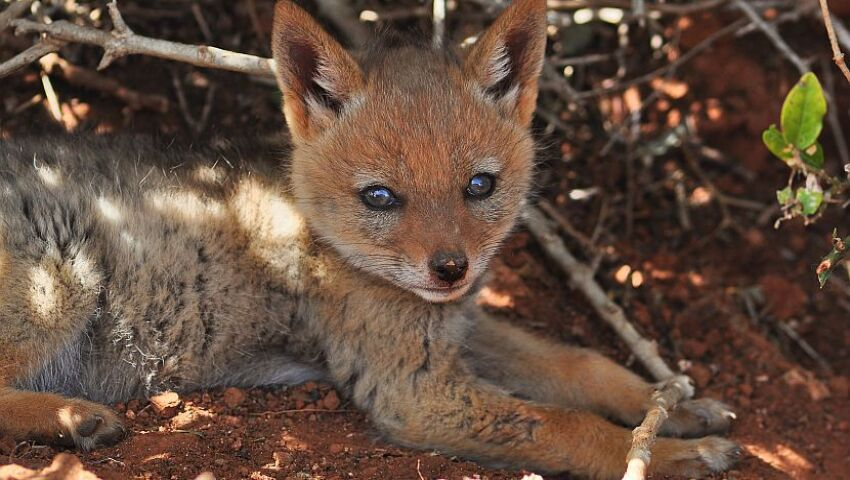 Project Update – What Will The Volunteers At The Wildlife Orphanage Be Up To This Summer?