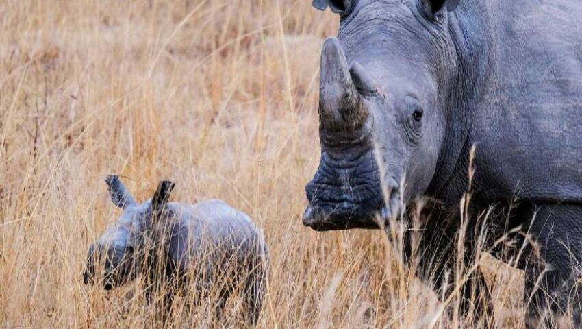 New Baby At The Rhino And Elephant Conservation Project!