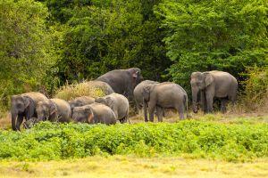 Elephant Observation & Data Logging