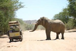 Elephant Patrols