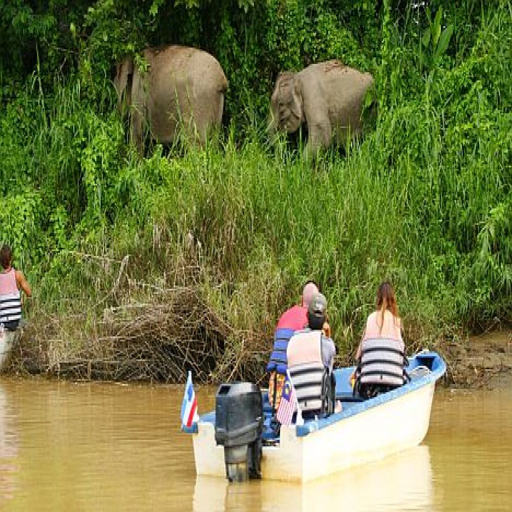 Wildlife Population Observation
