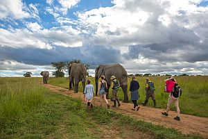 Feed And Walk Rhino And Elephants
