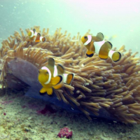 How The Perhentian Islands Marine Project Keeps Their Coasts Clear