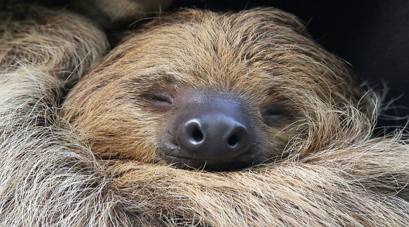 International Sloth Day 2017 - Learn More About These Amazing Animals
