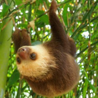 International Sloth Day 2018 - Sloths need our help, so let's get moving!