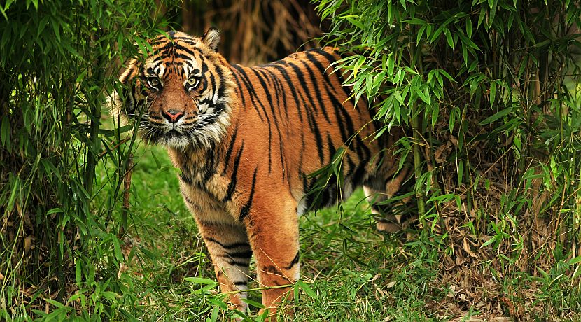 International Tiger Day 2017 - Some Roarrr-Some Facts About These Fierce Felines!