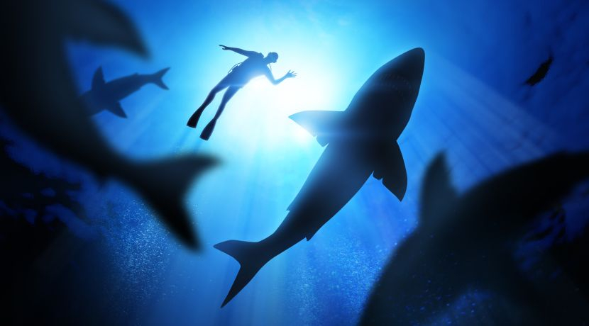Is The Discovery Channel's Annual 'Shark Week' Doing More Harm Than Good?