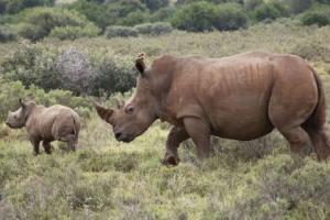 Maintaining The Breeding Centre