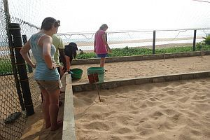Maintaining The Project Area And Beach
