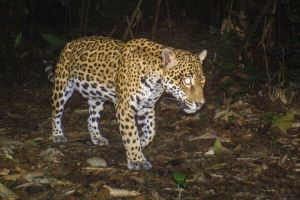Mammal Monitoring