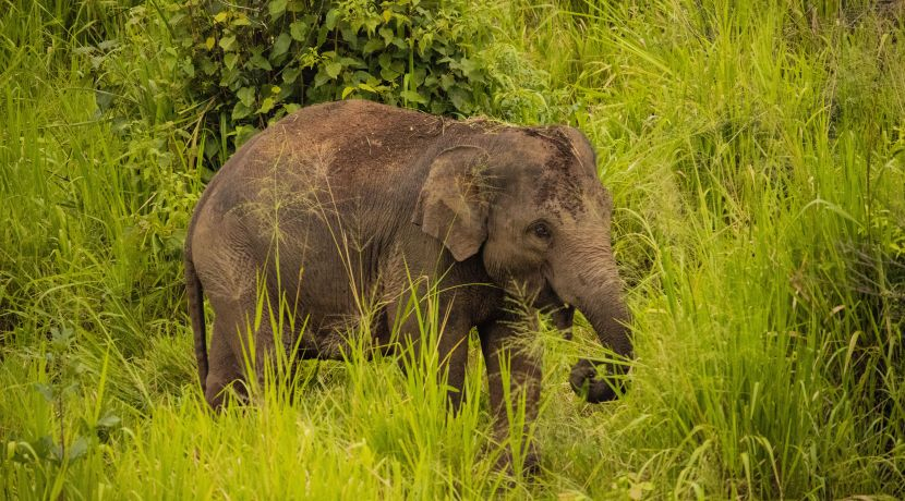 Meet The Poachers Turned Staff At The Great Elephant Project
