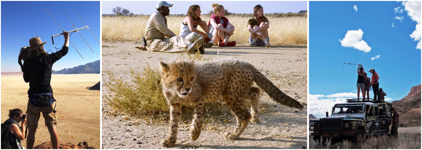 Volunteer at the Namibia Wildlife Sanctuary | The Great Projects
