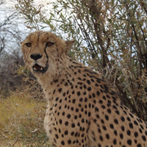 Namibia Wildlife Sanctuary Volunteer Reviews