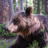 Nordic Wilderness Adventure Tour