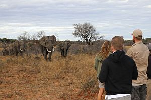 Observe Rhino And Elephant Behaviour