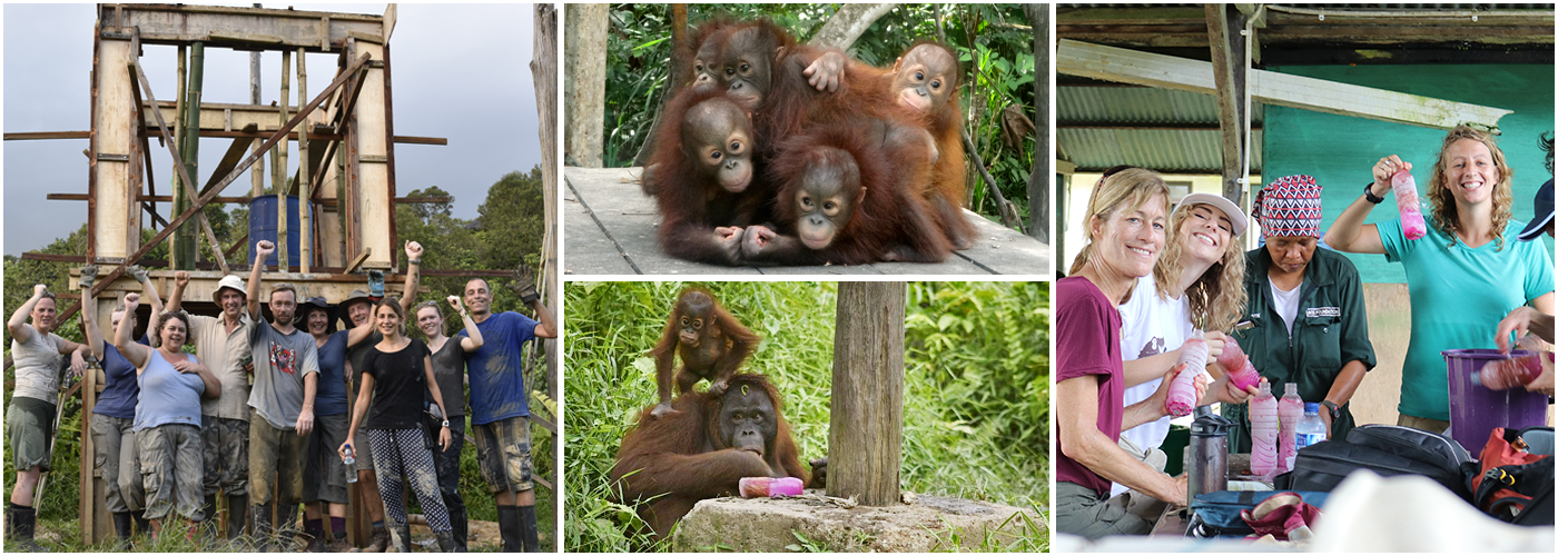 Volunteer With Orangutans At Samboja Lestari | The Great