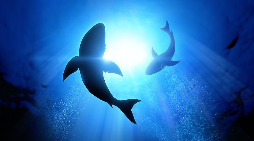 Shark Awareness Day 2018 - An Animal To Be Revered, Not Feared