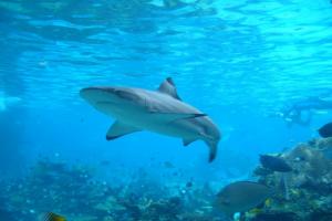 Shark ID