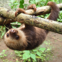 Sloth Conservation And Wildlife Experience