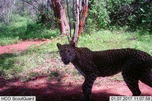 Species Monitoring & Data Gathering