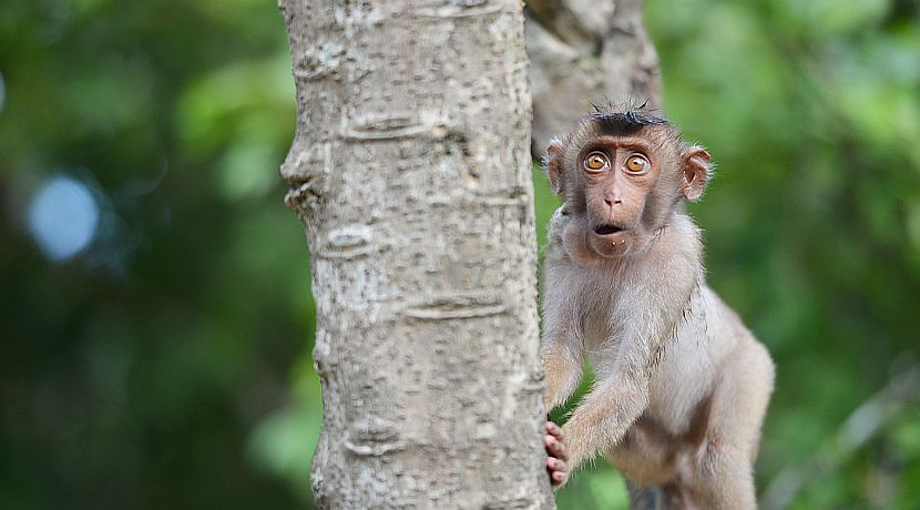 That's Bananas! Marvelous Monkey Facts