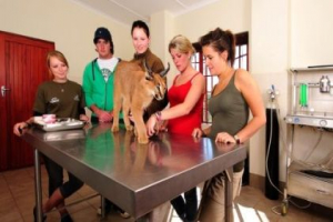 The Animal Rehabilitation Centre