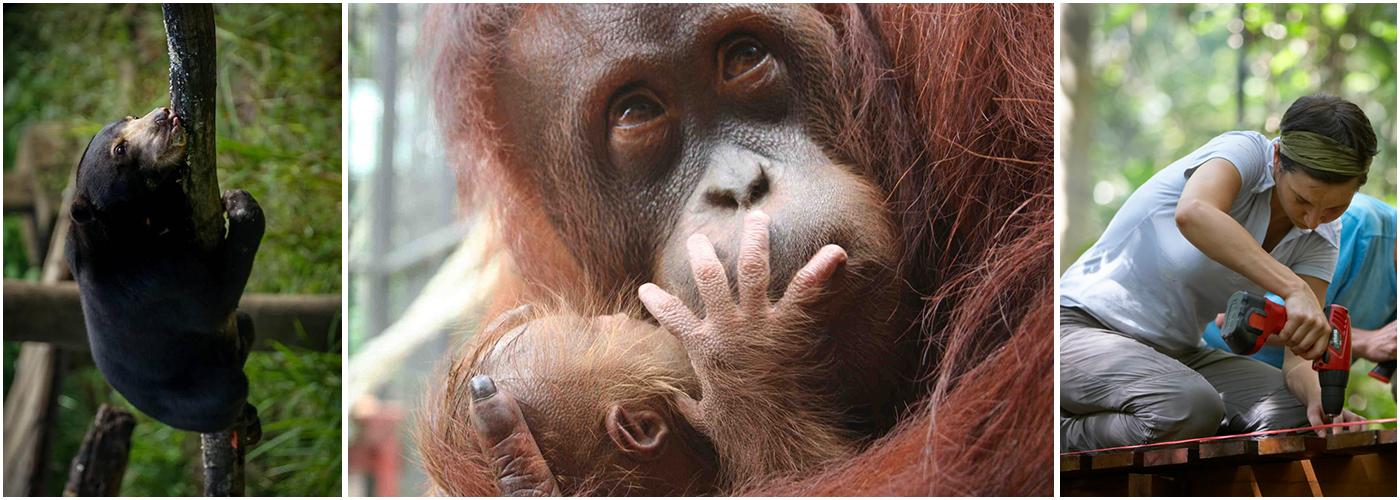Borneo Orangutan Sanctuary Volunteer Project | The Great