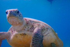 Turtle ID