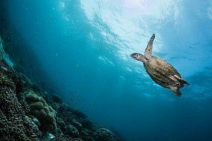 Turtle Monitoring