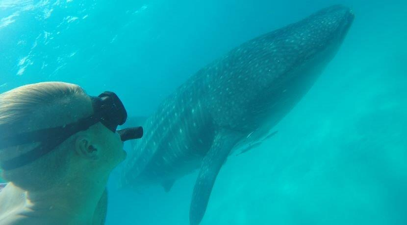 Visit The Mafia Island Whale Shark Conservation Project And Get A Whopping 33% Discount!