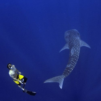 Whale Shark Research Project