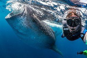 Whale Shark Work