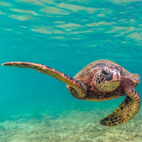 What Threats Are The Sea Turtles Facing?