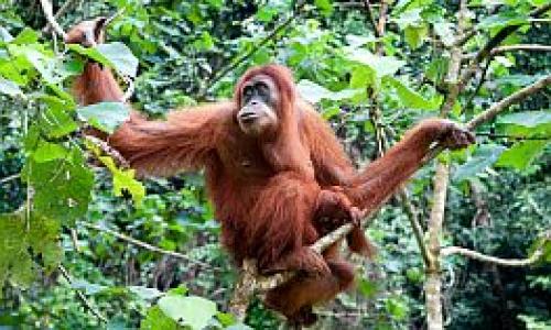 Wildlife Adventures in Sabah