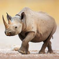 World Rhino Day 2017