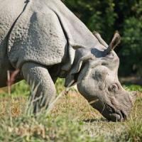 World Rhino Day 2018