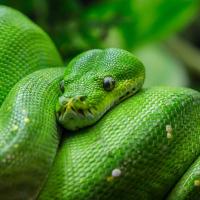 World Snake Day - Six Ssstrange Facts!