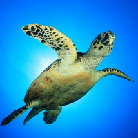 World Turtle Day - 129 Species At Risk Of Extinction