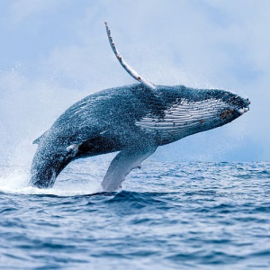 World Whale Day - Why Our Conservation Efforts Are More Important Now Than Ever Before