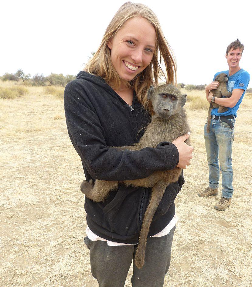 Namibia Baboon