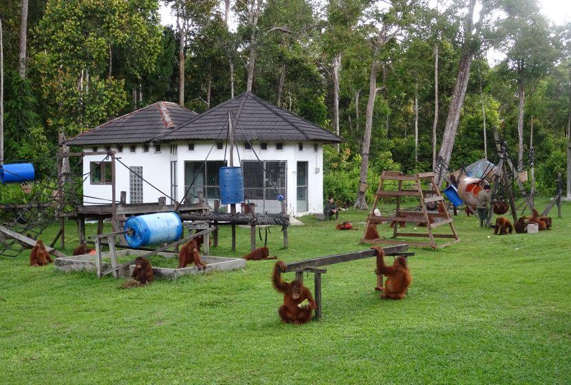 Baby Orangutan Playground