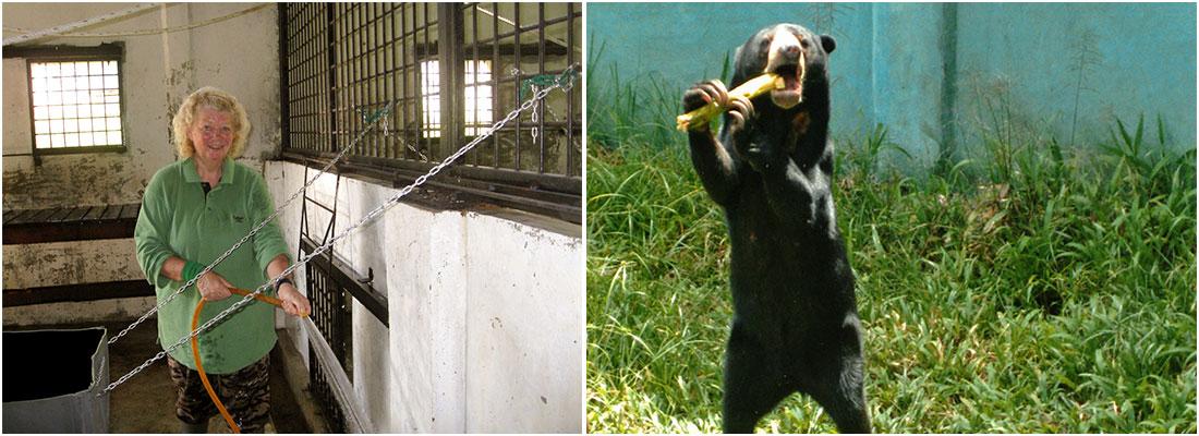 Sun Bear Enclosure The Great Orangutan Project