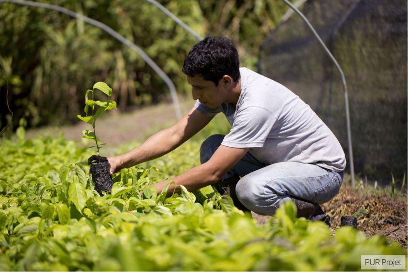 Peru Ecosia Tree Planting Project