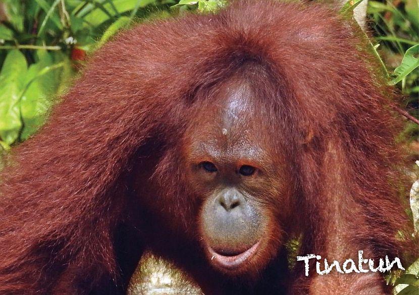 Samboja Lestari Orangutan Release May 2018