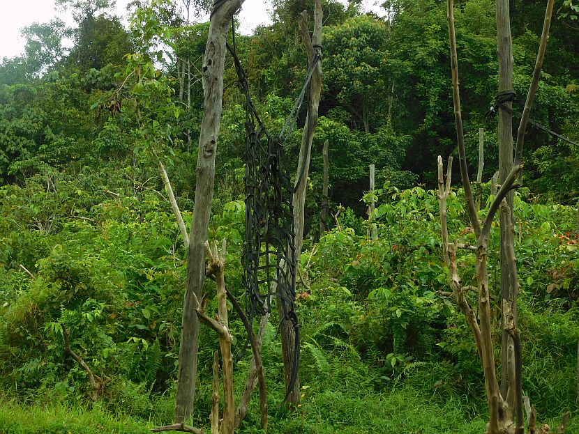 Borneo Hammock