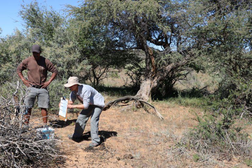 camera traps at the Namibia Wildlife Sanctuary