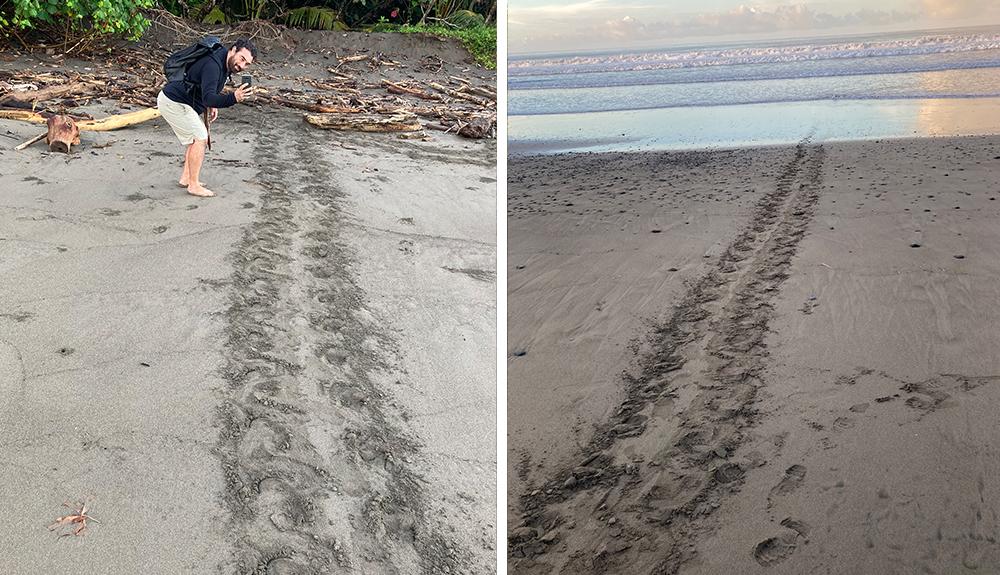 Turtle Tracks - Costa Rica Volunteer Experience