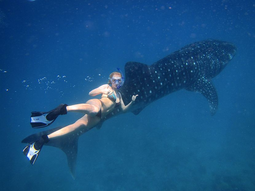 Volunteer with whale shark