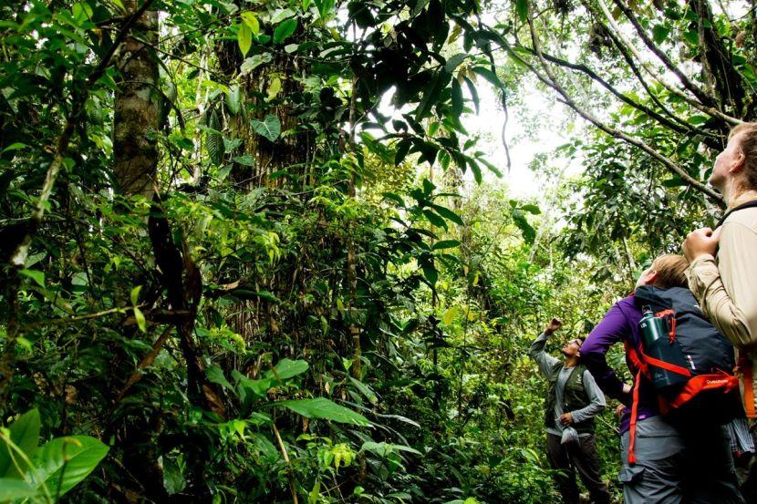 volunteer opportunities in the tropical rainforest